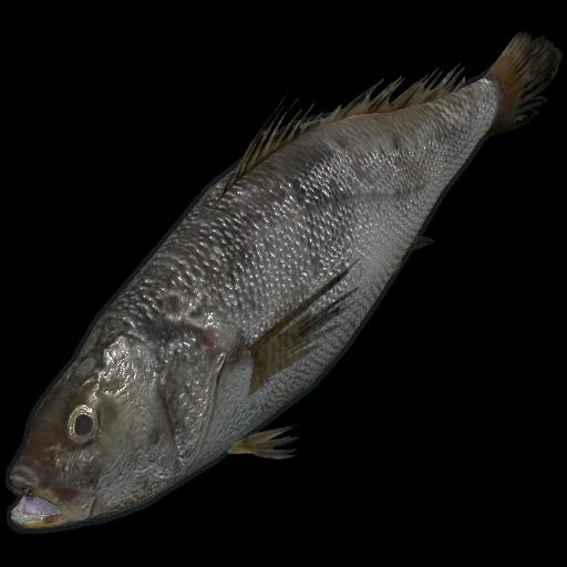 рыба в Rust